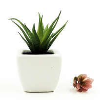 Cactus Pot Diffuser 10ml with Aloe Vera - Green Bamboo 789RMH