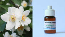 Pure Essential Oil Jasmine 10ml