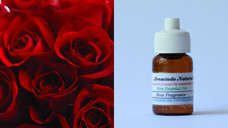 Pure Essential Oil Rose  10ml